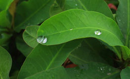 Drops on the leaf. royalty free stock images