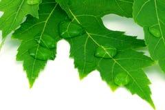 drops leaf water стоковая фотография