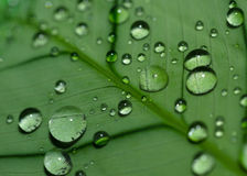 Drops on a leaf Stock Image