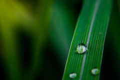 Drops on the leaves. Drops on the leaves close up Stock Photography