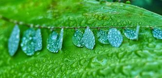 Drops on leaves Stock Image