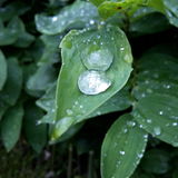 Drops on the leaves. After the rain Royalty Free Stock Images