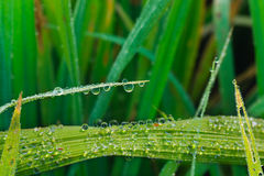Drops of morning dew Stock Images
