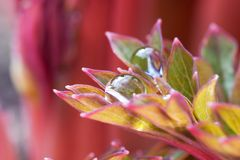 Drops ón petals Stock Photo