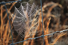 Drops on the net. Net web drop dew spider morning network Stock Photos