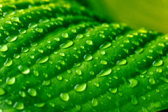 Free Drops Of Water Royalty Free Stock Photos - 19061468