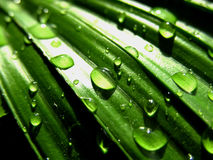 Drops Of Water On Surface Of Leaf Stock Photo