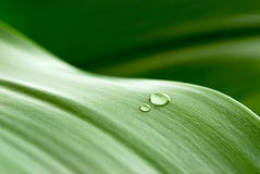 Free Drops On Leaf Royalty Free Stock Photography - 8593327