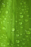 Drops On The Leaf Royalty Free Stock Photos