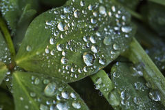 Drops over leaf, close up Stock Images