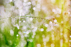 Drops on the plants after rain. Morning light and beautiful bokeh. Drops on the plants after rain royalty free stock photos