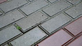 Drops of rain fall on the tile on the street stock footage