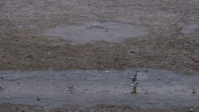 Drops of Rain Fall to the Pavement Forming a Puddle. Time Lapse stock video