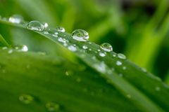 Drops of rain on the grass after the rain. On a green background Stock Photo