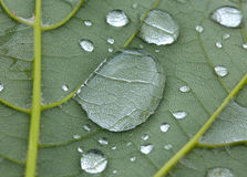 Drops of rain on a green leaf Stock Photo