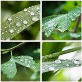 Drops of rain on  leaves closeup Royalty Free Stock Photo