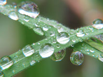 Drops of rain on the leaves of a green plant Royalty Free Stock Photo