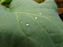 A drops of rain Stock Image