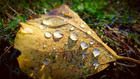 Drops of rain Royalty Free Stock Images