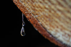 Drops of resin fall from a trunk Stock Images