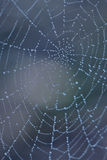 Drops on spider web Stock Image