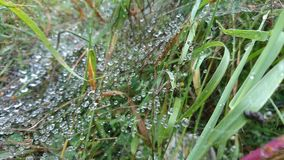 Drops on spiderweb. Morning gras and spiderweb on the mountain Stock Photos