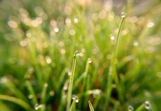 Drops of spring dew. Which reflects not only the morning sun, but also the grass on the field. A good photo can be used as a background for creating creative stock photos