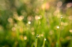 Drops of spring dew. Which reflects not only the morning sun, but also the grass on the field. A good photo can be used as a background for creating creative royalty free stock image