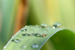 Drops of a transparent rose on the green grass. Royalty Free Stock Photo