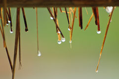 Drops of water Stock Image