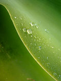 Drops of water. In green leaf Stock Photography