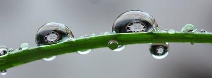 Drops of water close Royalty Free Stock Image
