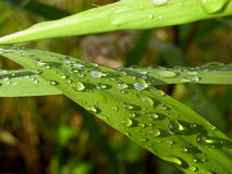 Drops of water on the grass after rain Stock Photography
