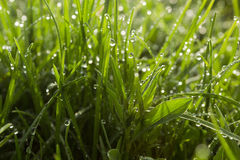 Drops of water on the grass after the rain. Stock Photos