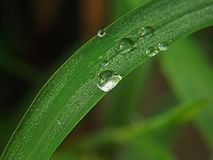 Drops of water on the green leaf royalty free stock photo