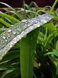 Drops of water on green leaf after rain Stock Image