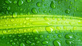 Drops of water on green leaf or refreshing dew in morning. Royalty Free Stock Image