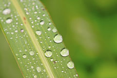 Drops of water on green leaves Royalty Free Stock Images