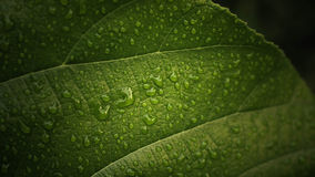 Drops of water on leaf Stock Photography
