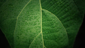 Drops of water on leaf Royalty Free Stock Photo