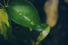 Drops of water on a leaf Stock Photography