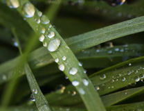 Drops of water over grass blades Stock Image