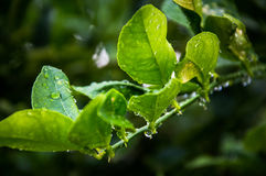 Drops of water perched on branches backgroung Royalty Free Stock Photo