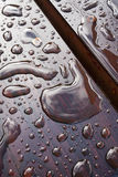 Drops of water. After rain. Stock Photos
