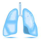 Drops of water in the shape of human lung Royalty Free Stock Image