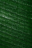 Drops of water on tropical leaf Royalty Free Stock Photography