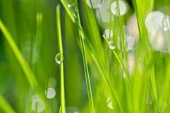 Dropss e hierba Foto de archivo libre de regalías