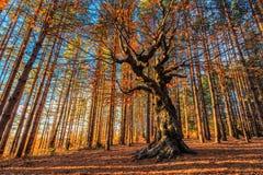 Drottning av skogen Royaltyfria Foton