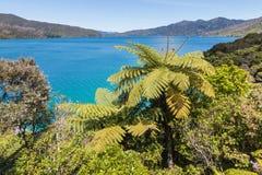 Drottning Charlotte Sound i det Marlborough ljudet, södra ö, Nya Zeeland arkivfoton