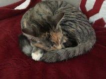 Drottning Cleo katten arkivbild